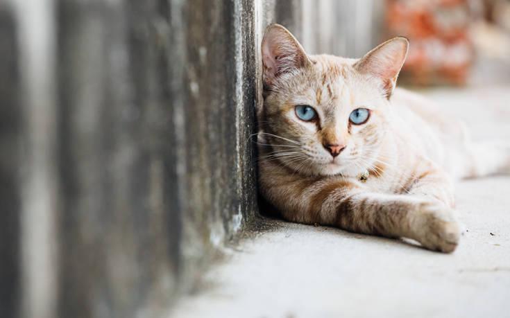 Η Νέα Υόρκη απαγορεύει την αφαίρεση των νυχιών στις γάτες