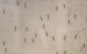 Ονδούρα: Σε κατάσταση συναγερμού η χώρα για επιδημία δάγκειου πυρετού
