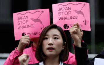 Αρχίζει ξανά το κυνήγι φαλαινών στην Ιαπωνία