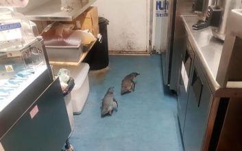 Συνελήφθησαν πιγκουίνοι - διαρρήκτες που έβαλαν στο στόχαστρό τους εστιατόριο σούσι