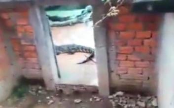Κοριτσάκι βρήκε τραγικό θάνατο πέφτοντας σε λάκκο με κροκόδειλους