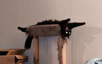 Αν έχεις γάτα, θα καταλάβεις