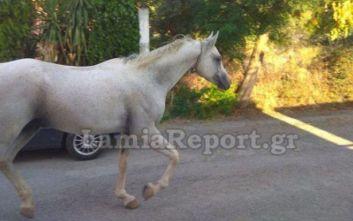 Λαμία: Μετά τον ταύρο σειρά είχε ένα άλογο