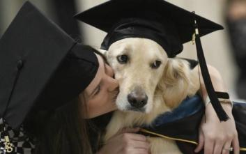Πώς οι «σκύλοι θεραπείας» βοηθούν φοιτητές με τις σπουδές τους