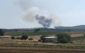 Φωτιά ξέσπασε σε δασική έκταση στην Εύβοια