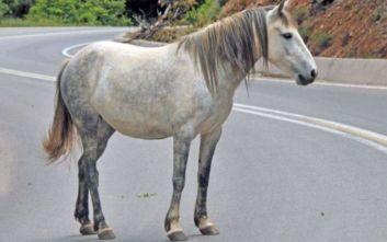 Θεσσαλονίκη: Στη δυτική είσοδο της πόλης ακινητοποιήθηκε το άλογο που κυκλοφορούσε ελεύθερο