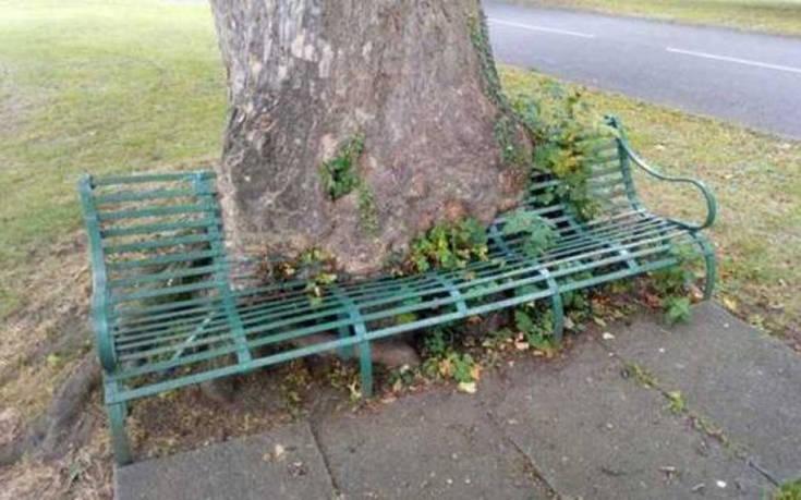 Φυτά και δέντρα που φυτρώνουν παντού