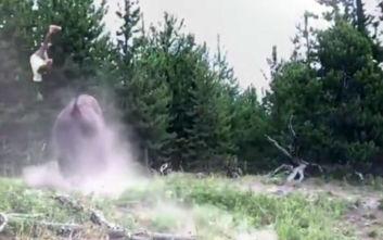 Βίσονας σηκώνει 9χρονη με δύναμη στον αέρα και τη ρίχνει στο έδαφος