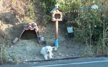 Ο «Χάτσικο» της Ναυπάκτου: Σκύλος ζει δίπλα στο εικόνισμα του νεκρού αφεντικού του