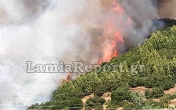 Φωτιά στη Φθιώτιδα: Κατακαίει τα πάντα στο πέρασμα της, ενισχύονται οι δυνάμεις της Πυροσβεστικής