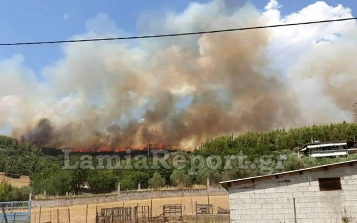 Φωτιά σε δασική έκταση στη Φθιώτιδα – Newsbeast
