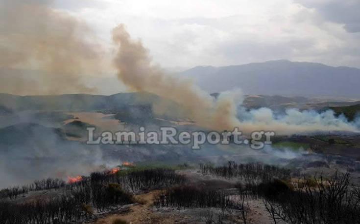 Λαμία: Φωτογραφίες από τη φωτιά που έφτασε στο χωριό Δίβρη – Στο χωριό ο Κώστας Μπακογιάννης