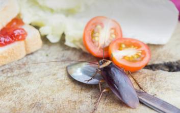 Σύντομα οι κατσαρίδες θα είναι δύσκολο να εξολοθρευτούν