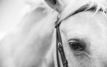 Άλογο κόβει βόλτες σε δρόμους της Θεσσαλονίκης