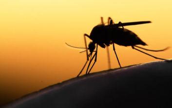 Φονικό κουνούπι άφησε εγκεφαλικά νεκρό έναν άνδρα μέσα σε εννιά ημέρες