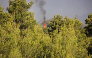 Εκπρόσωπος Πυροσβεστικής: Περιμένουμε αύξηση των ανέμων μετά τις 11 αλλά είμαστε αισιόδοξοι