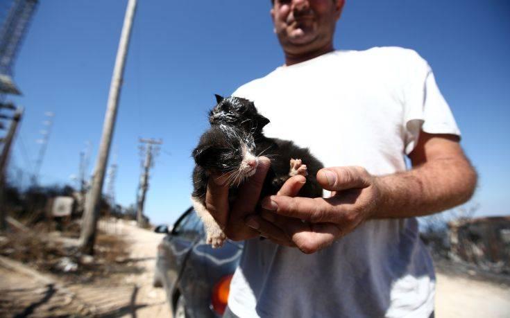 Η σκυλίτσα που έσωσε τα κουτάβια της από την φωτιά στον Υμηττό 12