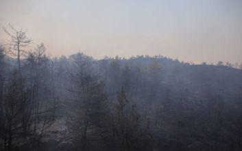 Μεγάλη φωτιά στην Εύβοια: Με το πρώτο φως πετούν τα καναντέρ, αγωνία για τους ανέμους