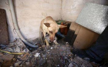 Η σκυλίτσα που έσωσε τα κουτάβια της από την φωτιά στον Υμηττό