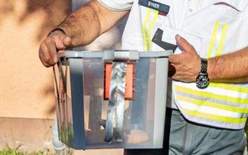 «Συνελήφθη» η κόμπρα που αναστάτωσε επί μέρες μια κωμόπολη στη Γερμανία
