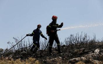 Φωτιά σε δασική έκταση στην Αρκαδία