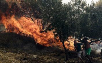 Σε ύφεση η φωτιά που εκδηλώθηκε στη Φωκίδα