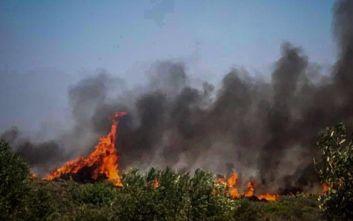 Φωτιά στην Ελαφόνησο: Κάηκε το 25% του νησιού