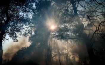 Μεγάλη μάχη των πυροσβεστών στο μέτωπο της Πλατάνας στην Εύβοια