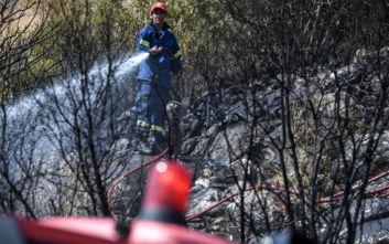 Πυρκαγιά στη Χαλκιδική