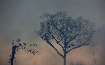 Οι βροχές δεν θα σβήσουν τις φωτιές στον Αμαζόνιο για αρκετές εβδομάδες