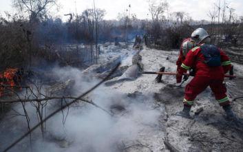 Μαυρισμένη γη και πτώματα ζώων από τις φωτιές στη Βολιβία