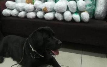 Ο αστυνομικός σκύλος Άτλας και τα 22 κιλά κάνναβης σε κοντέινερ