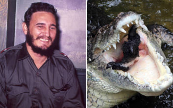 Ο κροκόδειλος που δώρισε ο Φιντέλ Κάστρο στη Σουηδία επιτέθηκε σε συνταξιούχο