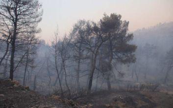 Στυλιανίδης για φωτιές: Η Ευρωπαϊκή Ένωση θα σταθεί στο πλευρό της Ελλάδας
