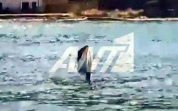Ελικόπτερο έπεσε στη θάλασσα μεταξύ Πόρου και Γαλατά