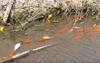 Τι σκότωσε εκατοντάδες ψάρια στο φράγμα Αποσελέμη