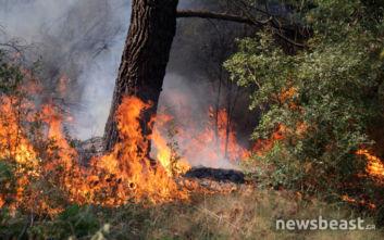 Μεγάλη φωτιά στην Εύβοια: Αναζωπυρώσεις στην περιοχή Μακρυμάλλη