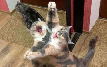 Όποιος έχει γάτα ξέρει