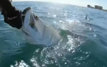 Καρχαρίας του άρπαξε το ψάρι από το χέρι!