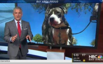Σκύλος πάλεψε με… καρχαρία για να σώσει το αφεντικό του