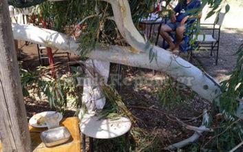 Παραλίγο τραγωδία στη Στυλίδα, δέντρο προσγειώθηκε σε καρέκλα