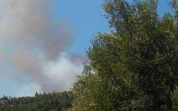 Η φωτιά στην Αρτέμιδα πέρασε μέσα από αυλές, σπεύδουν δυνάμεις στους Δελφούς