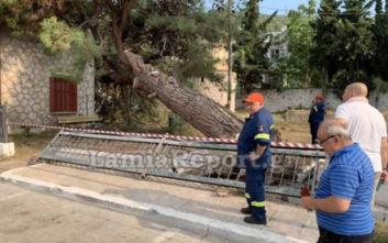 Έπεσε δέντρο στο σταθμό του τρένου στη Στυλίδα