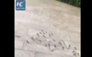 Ο τυφώνας Λέκιμα έβγαλε τα ψάρια στη στεριά
