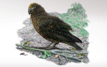 «Ηρακλής ο Απρόσμενος»: Βρέθηκε απολίθωμα του μεγαλύτερου παπαγάλου στη Γη