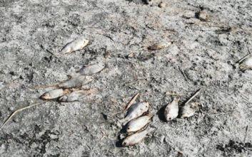 Χιλιάδες νεκρά ψάρια στη λίμνη Κορώνεια