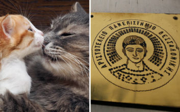 Γάτα ιδιοκτήτης ραντεβού site