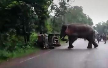 «Εκνευρισμένος» ελέφαντας ανατρέπει παρκαρισμένο φορτηγό