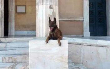 Το συγκινητικό «αντίο» της ΕΛ.ΑΣ. στον αστυνομικό σκύλο Άρη