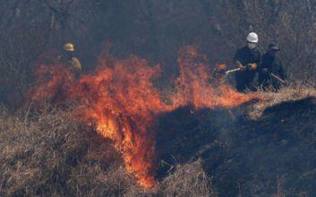 Πάνω από 2,3 εκατ. ζώα πέθαναν στις φωτιές στη Βολιβία